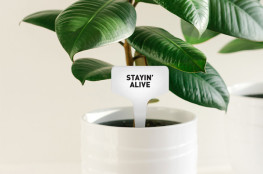 Plant tags, range of colours, packs of 12 or 24, assorted or custom